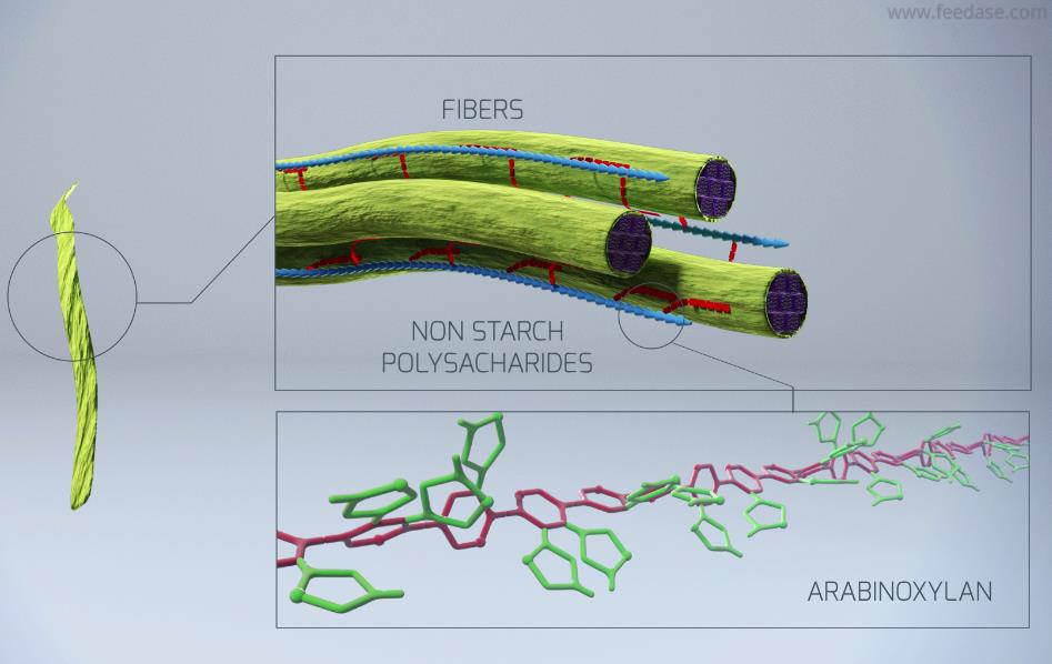 Plant cell walls made of complex fibers