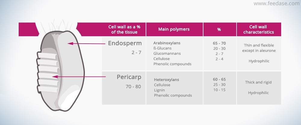Composition of endosperm and pericarp cell walls