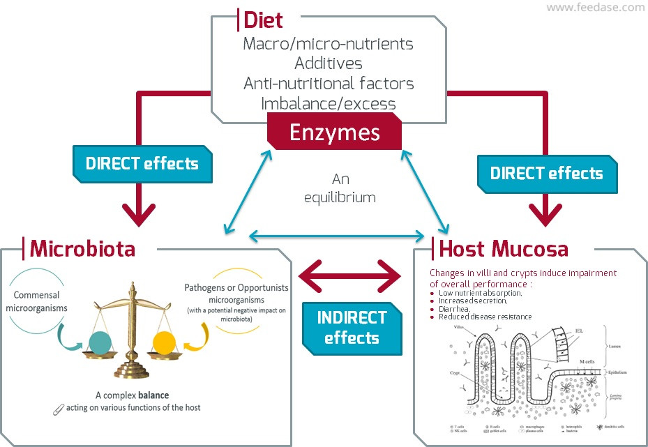 Interaction diet microbiota mucosa